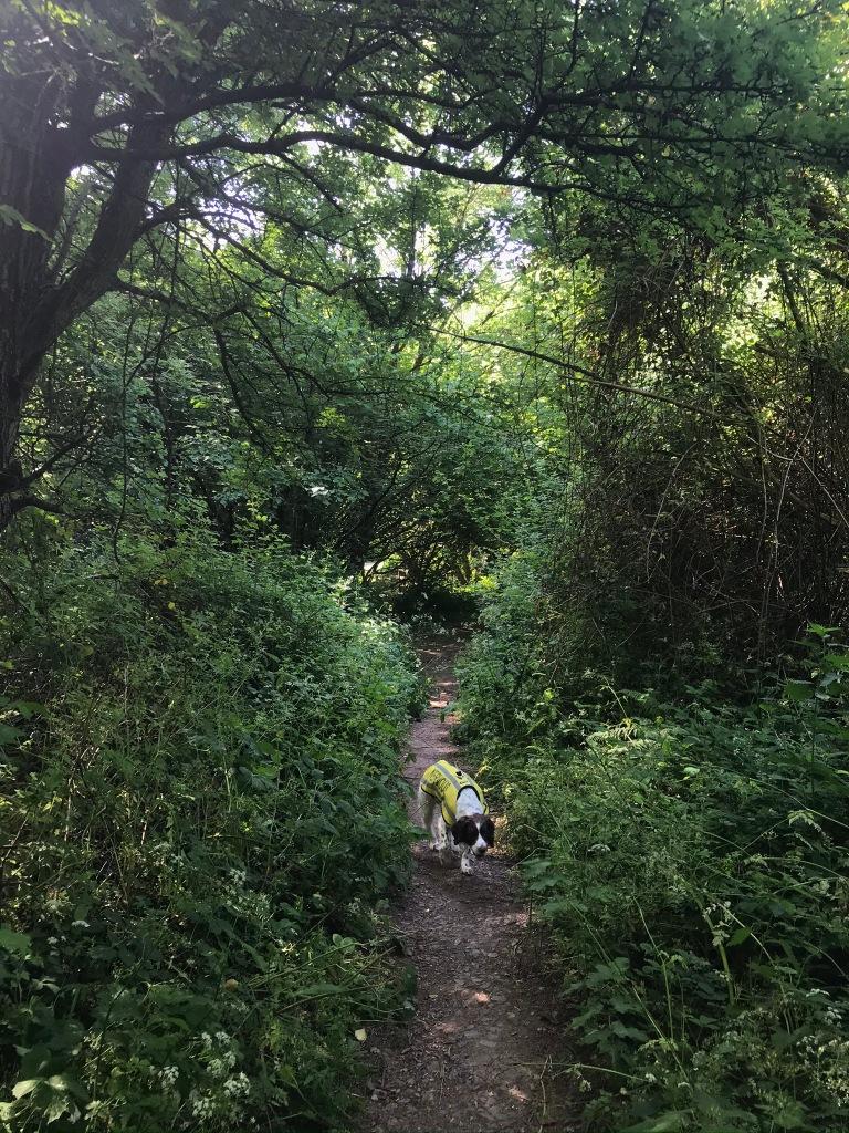 Dog walking through the woods